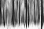 Winter Abstract Monotone